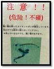 katsuonoeboshi2